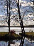 Lychen See Bäume 120_163